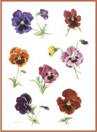 Pansy  collection
